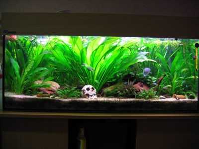 aquarium neu einrichten mit besatz industrie schmutzwasser tauchpumpen. Black Bedroom Furniture Sets. Home Design Ideas
