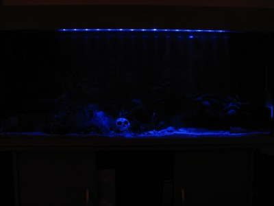 mein aquarium 300 liter spa. Black Bedroom Furniture Sets. Home Design Ideas